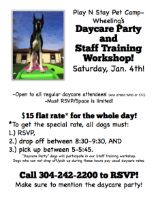 Staff Training dog daycare