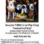 Thanksgiving Party for Dog