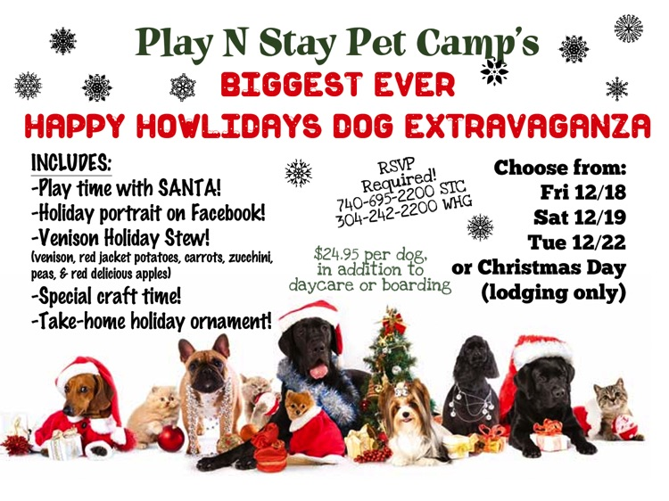 A Happy Dog Day Camp And Boarding