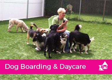 Dog Boarding & Daycare