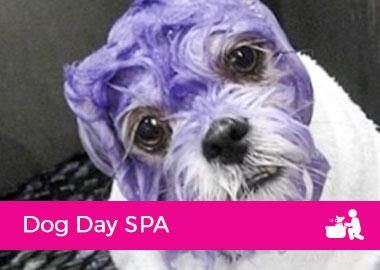 Dog Day SPA
