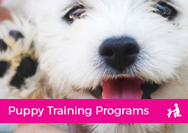 Puppy Training Programs