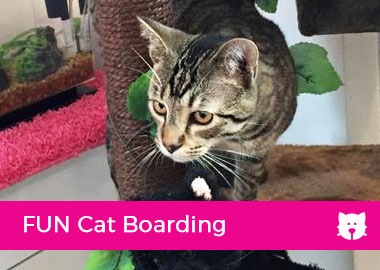 FUN Cat Boarding