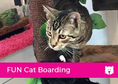 FUN Cat Boarding
