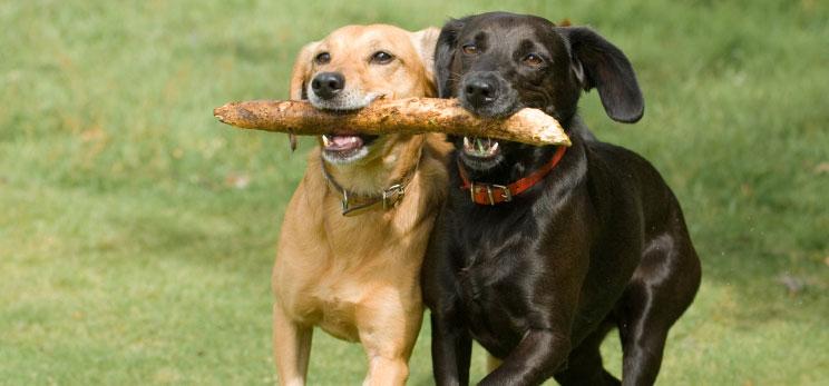 Puppy Dog Socialization