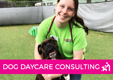 DOG DAYCARE CONSULTING