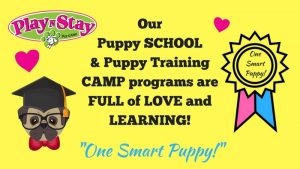 Puppy Daycare & Training Program