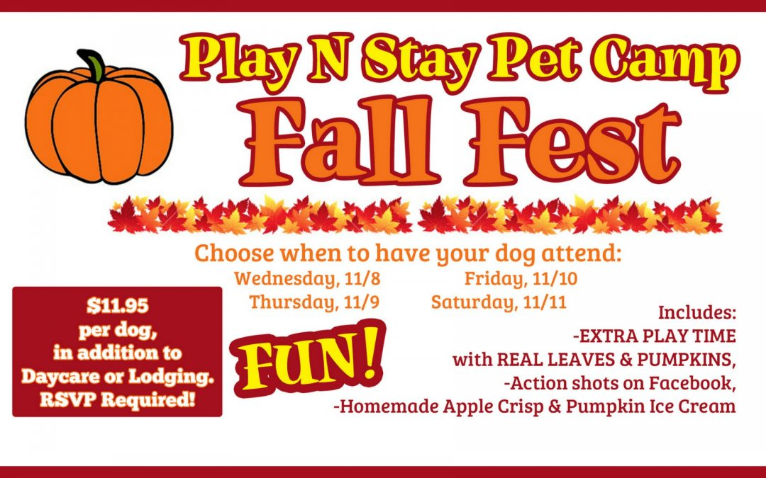 Fall Fest is upon us!