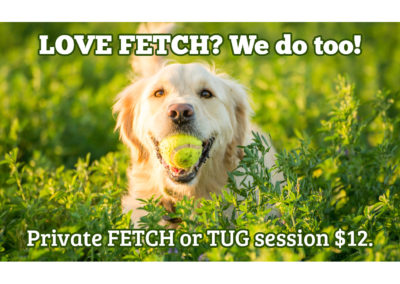 2018 Fetch-Session
