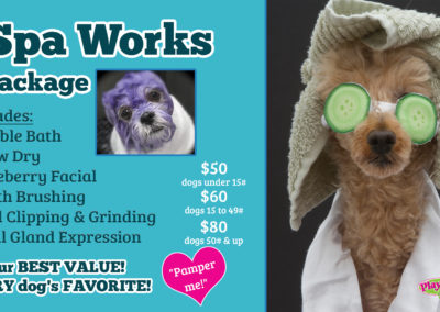 Dog SPA Grooming and Baths
