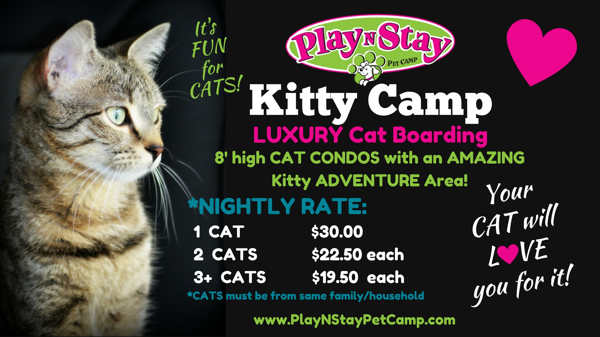 play n stay pet camp fun dog boarding daycare overnight lodging